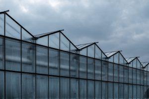 Kweken onder glas